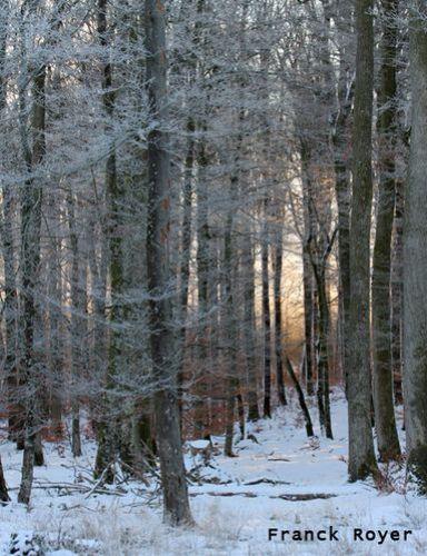 foret en hiver