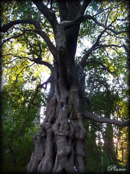 arbremots