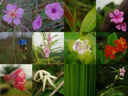 Mon herbier de Nyonié