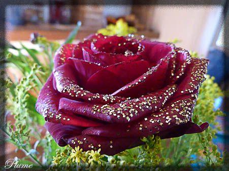 rosepaillette.jpg