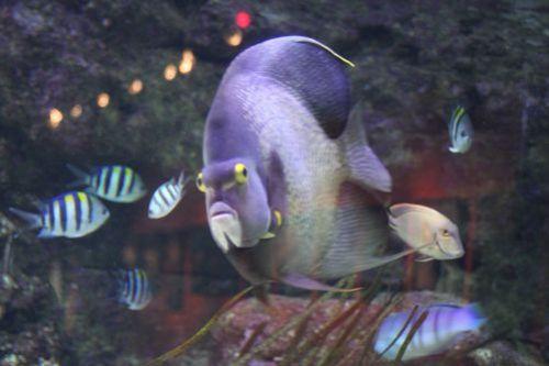 poisson-mignon