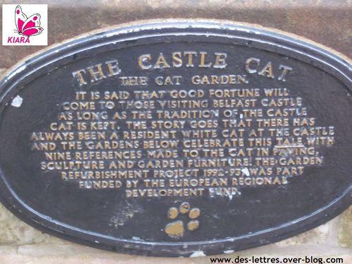 3--Chateau-de-Belfast-chats.jpg