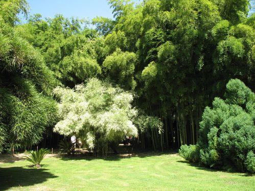 Bambouseraie-Anduze.JPG
