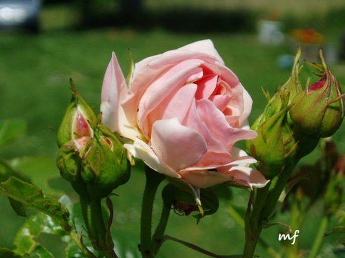 fleurs-de-mai-009-copy-copie-1.jpg