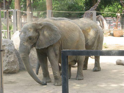 Barcelona-zoo-elephant