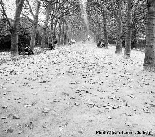 070--Allee-parisienne.jpg