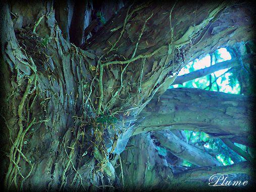 arbrebreze2b.jpg
