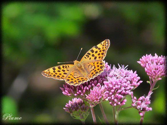 papillonpose.jpg