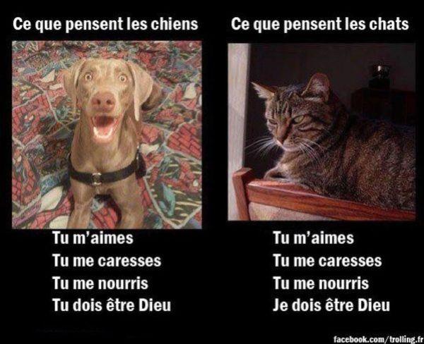 chien-chat-pour-annelauret.jpg