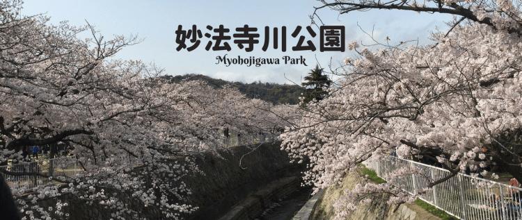 【神戶賞櫻】須磨妙法寺川さくらまつり櫻花祭,跟隨兵庫民宿老闆娘的賞櫻腳步吧