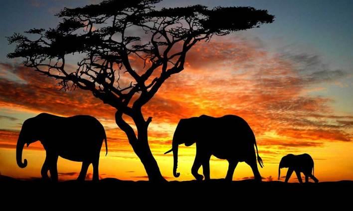 Sadakatte Sınır Tanımayan Filler!