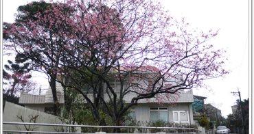 台北三芝 芝柏山莊~粉紅櫻花下的藝術園區