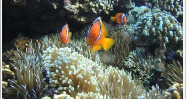 台東蘭嶼 勵德管訓班岸潛 只想跟小丑魚玩~阿一一海寶蘭嶼潛水之旅