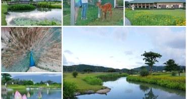 花蓮吉安景點 台開心農場(洄瀾灣開心農場) 不輸雲山水~探訪梅花鹿、鴨鴨與花蓮溪口的美麗祕境