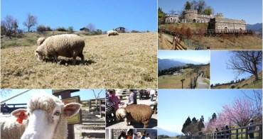 南投 清境農場 青青草原 跟綿羊玩~阿一一清境農場櫻花之旅