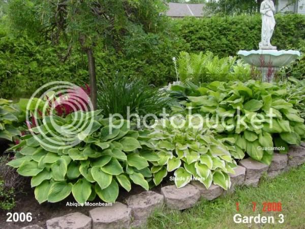 hostas in garden design