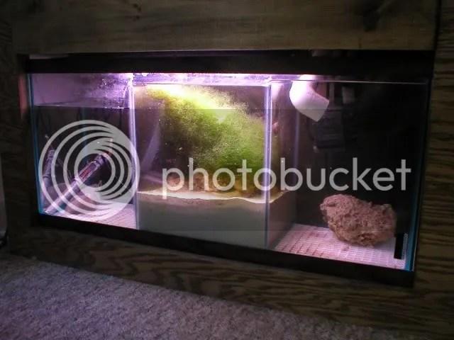30 gallon sump reef