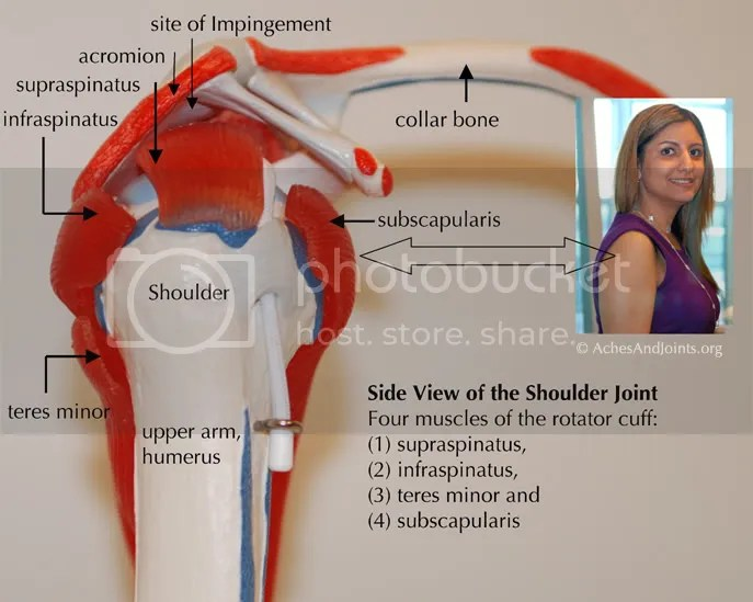 shoulder rotator cuff anatomy disease