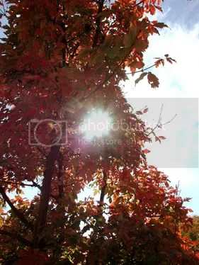 5SummerSunandFallLeaves.jpg Summer Sun and Fall Leaves image by blayderboi89