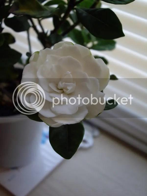 Pretty white petals