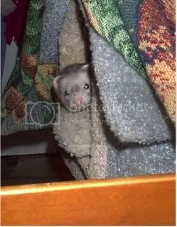 Pip peeks at his Momma