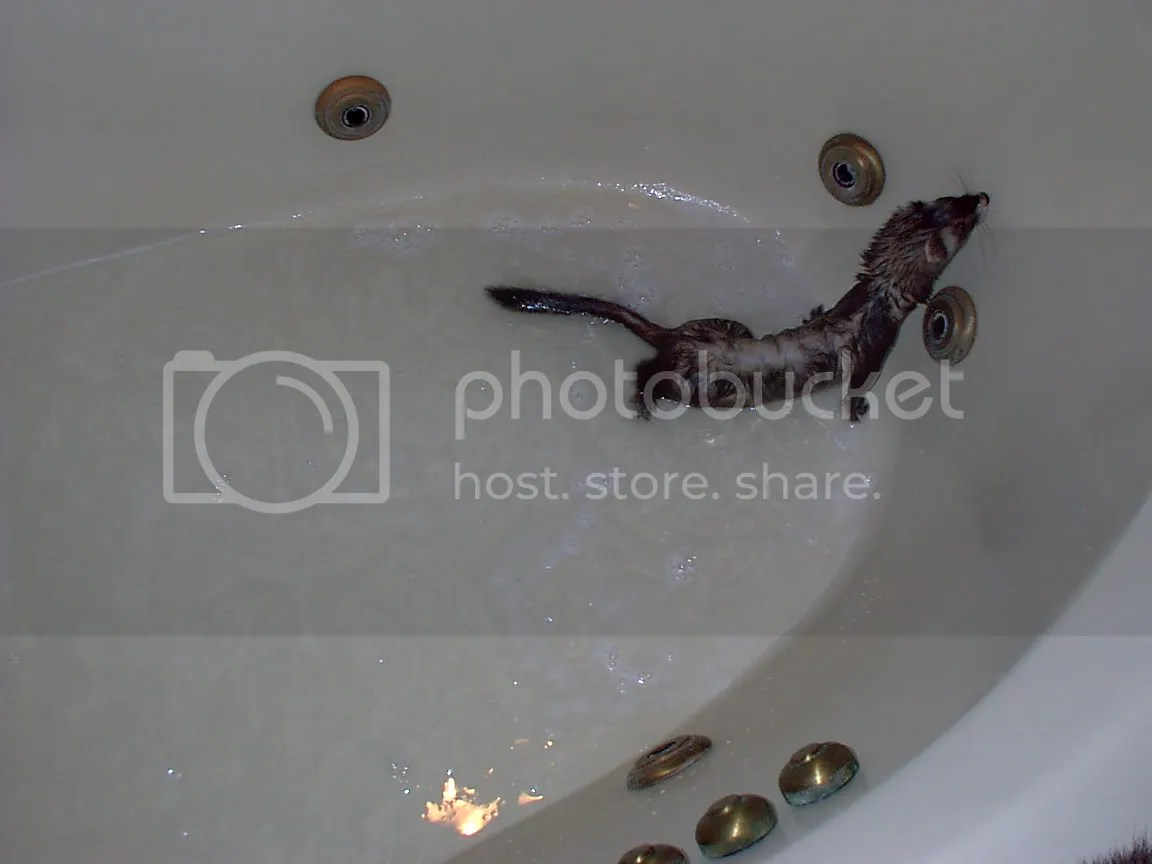 Teeny Tiny Min-Weasel in the Tub