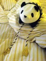 Panda-kun with tricolour belt