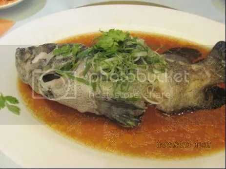 photo fish.jpg