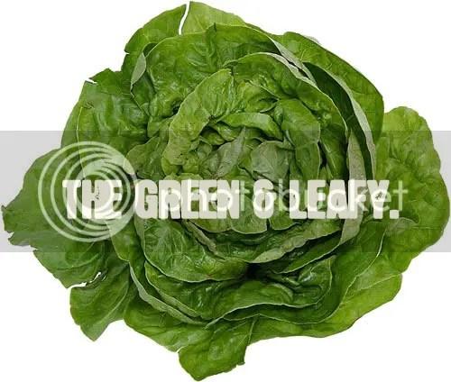 photo lettuce3.jpg