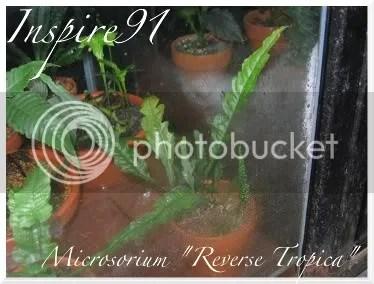 Micro. Reverse Tropica