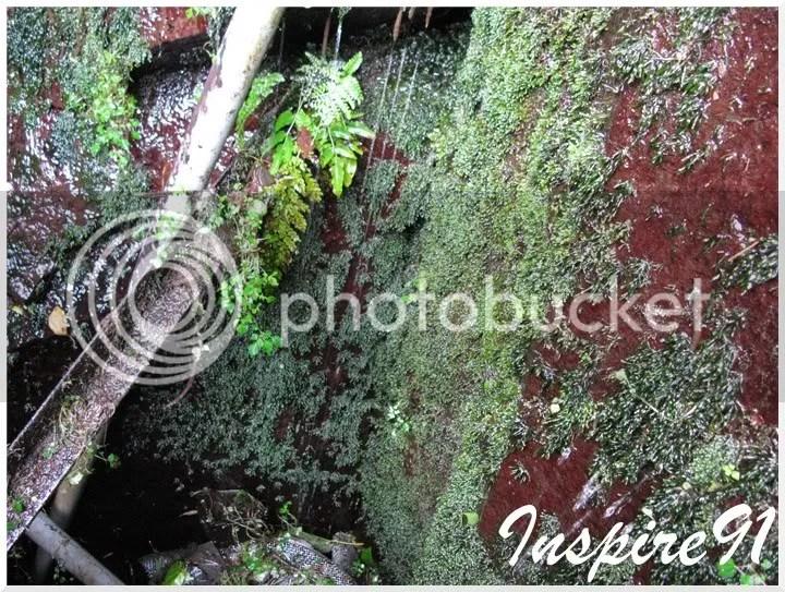 fissiden wall