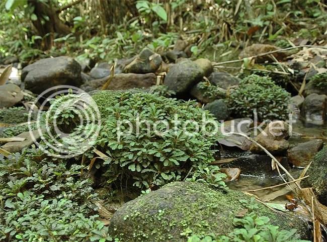 Wild B. Sintang (Team Borneo)