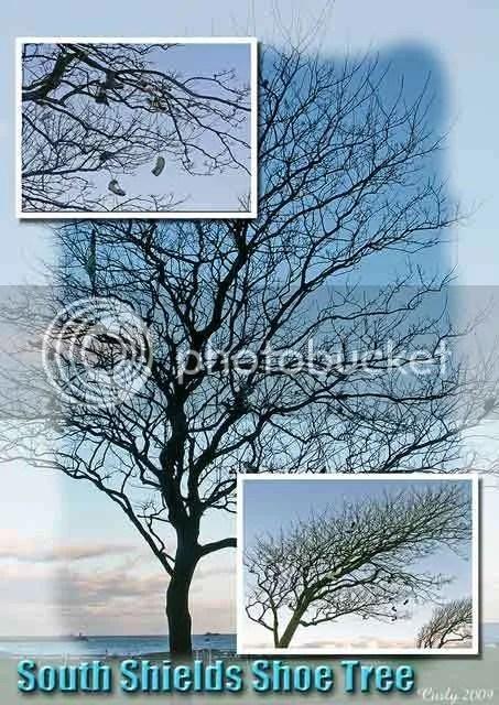 Shoe tree, South Shields