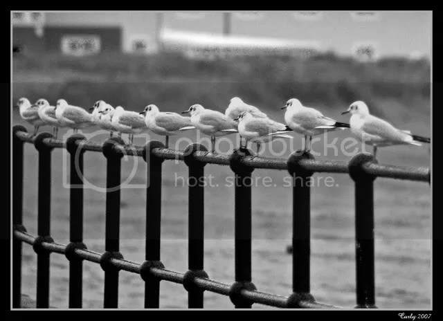 seagulls, south shields
