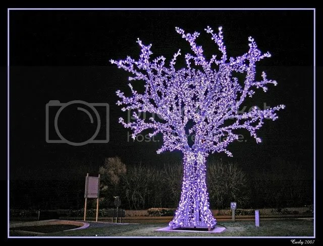 LED tree, Jarrow