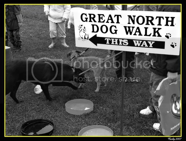 Great North Dogwalk 2007, South Shields