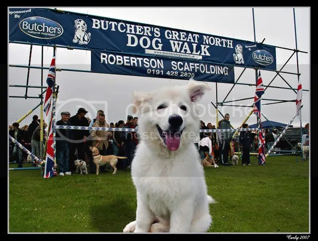 Great North Dog Walk, South Shields, 2007 start line