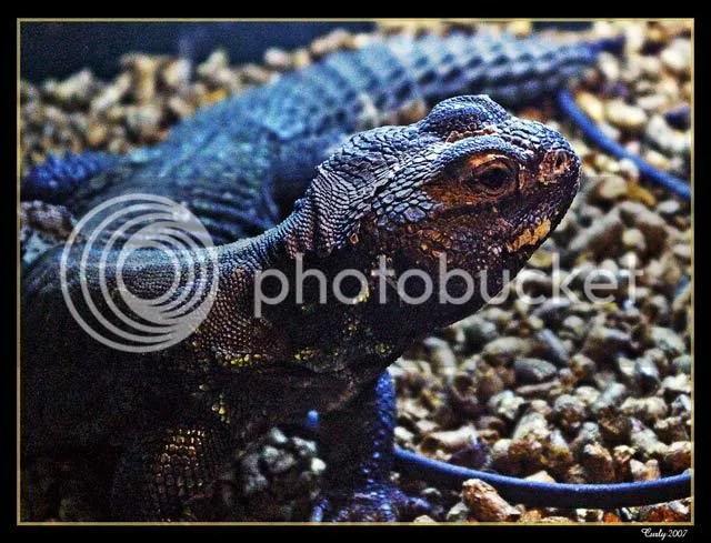 lizard, south shields museum