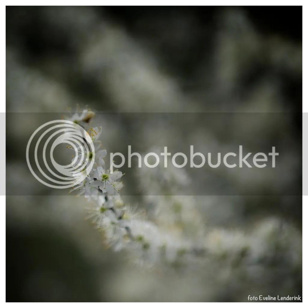 photo image-18.jpg