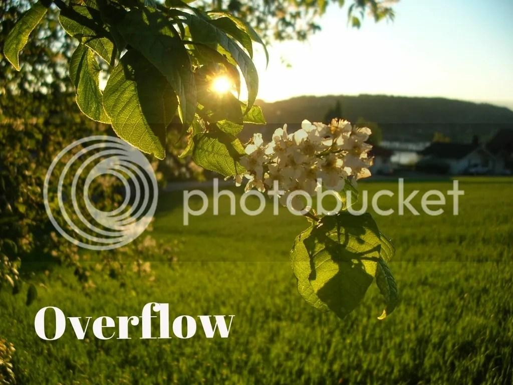 Overflow @godschicki #theLoft