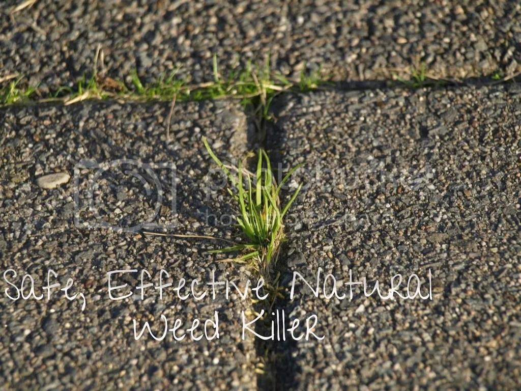 Natural Weed Killer & Weeding @godschicki