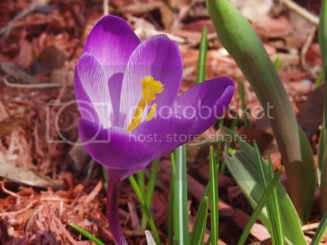 A purple flower. Pictures, Images and Photos