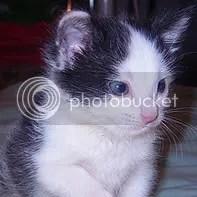 my cat Tom