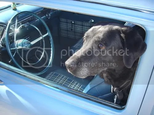 Dog in Chevy