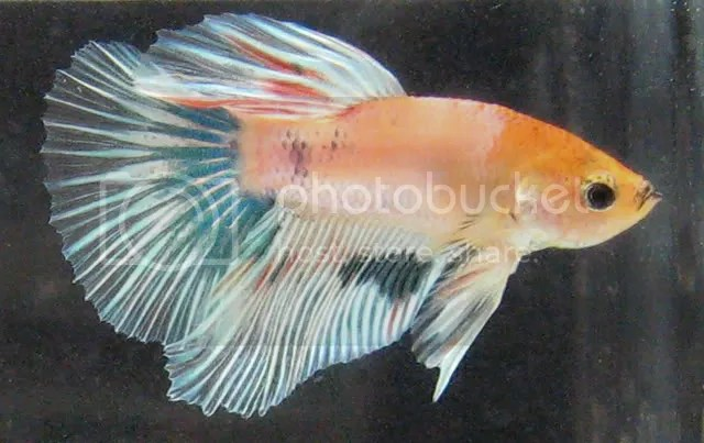 marble male