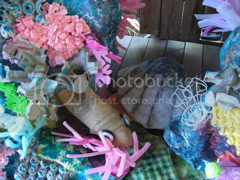 Moray eel and giant clam