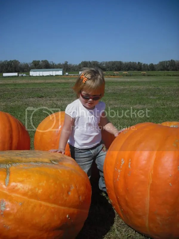 Those are some huge pumpkins!