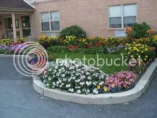 Garden at Uncle's apt