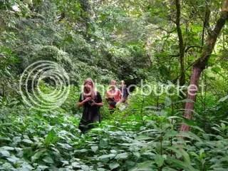 Trekking through the rainforest
