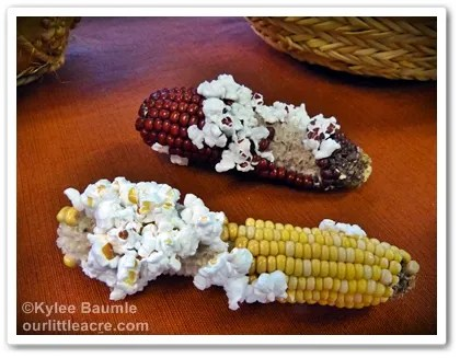 Our Little Acre Glass Gem Corn from Native Seeds